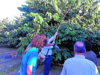 Visitantes en una plantación de chirimoya de la Costa.